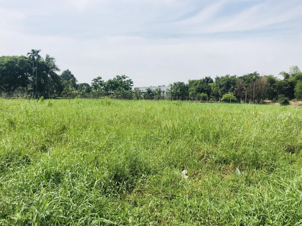 Cần bán lô đất gần đường Huỳnh Thi Dần,xã Bình Mỹ, Huyện Củ Chi