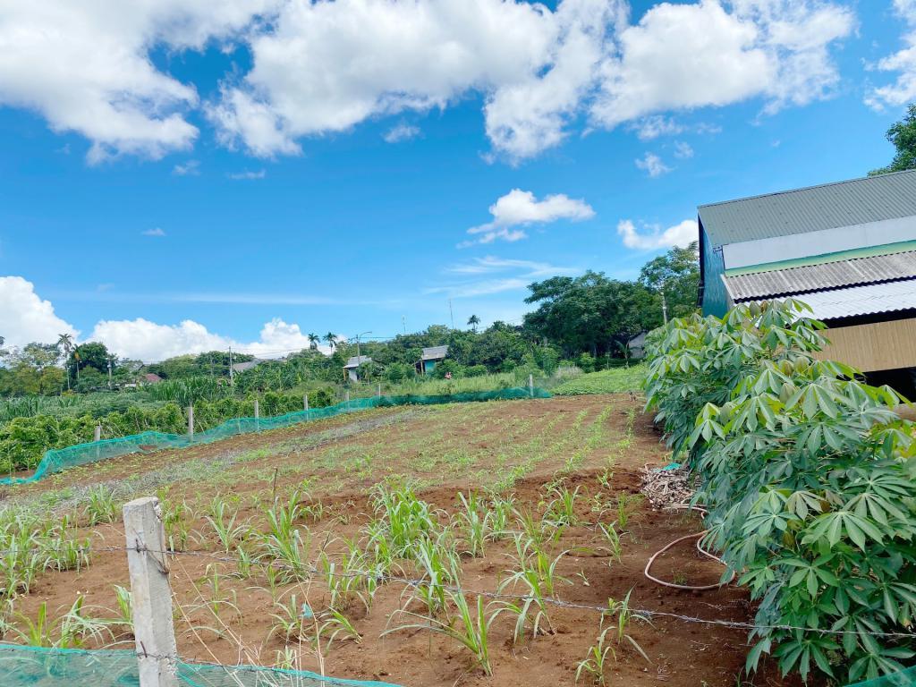 Mua bán nhà đất tại Quảng Trị, Đất Đầu Tư Giá Rẻ Hải Thái - Gio Linh
