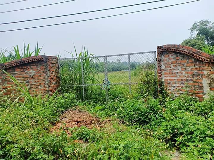 Bán gấp 1400m Phú Cát gần quốc lộ 21a khu công nghệ cao Hòa Lạc