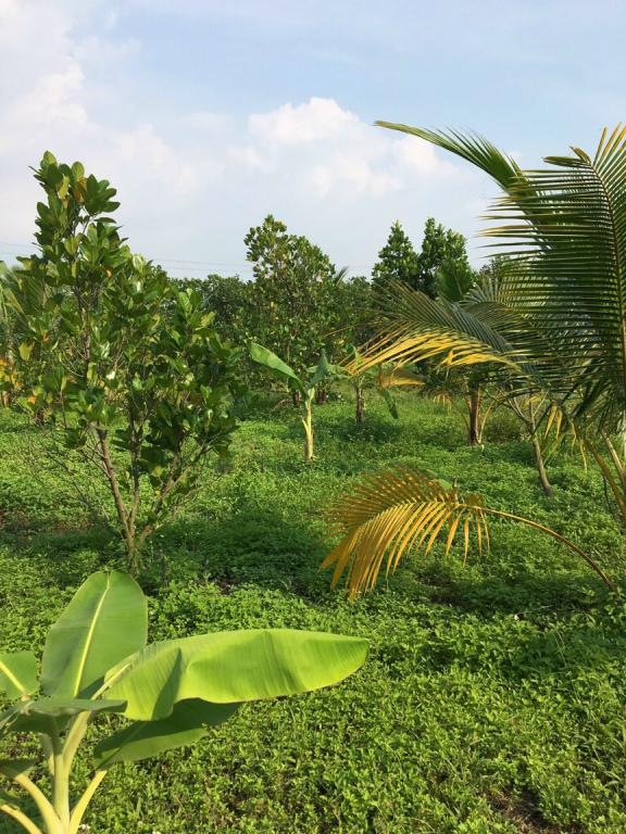 Bán nhà vườn nghỉ dưỡng 1.1 ha , Vĩnh Tân, Vĩnh Cửu, Đồng Nai