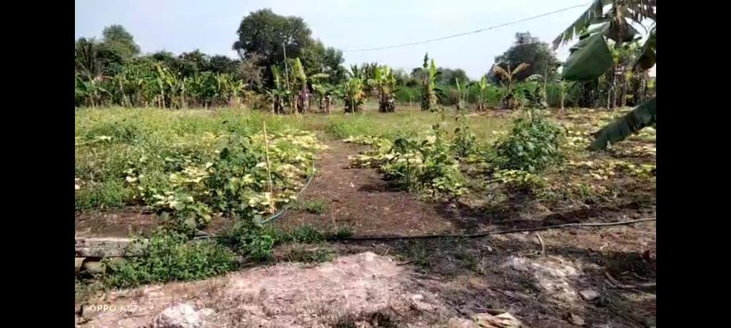 Bán nhà vườn 1.5 ha ( 15530m2 ) xã Sông Trầu , Trảng Bom , Đồng Nai