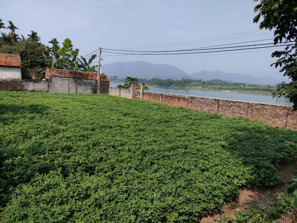 Chính chủ cần bán gấp lô đất 433m2 tại Thôn Pheo,Minh Quang,Ba Vì,Hà Nội.