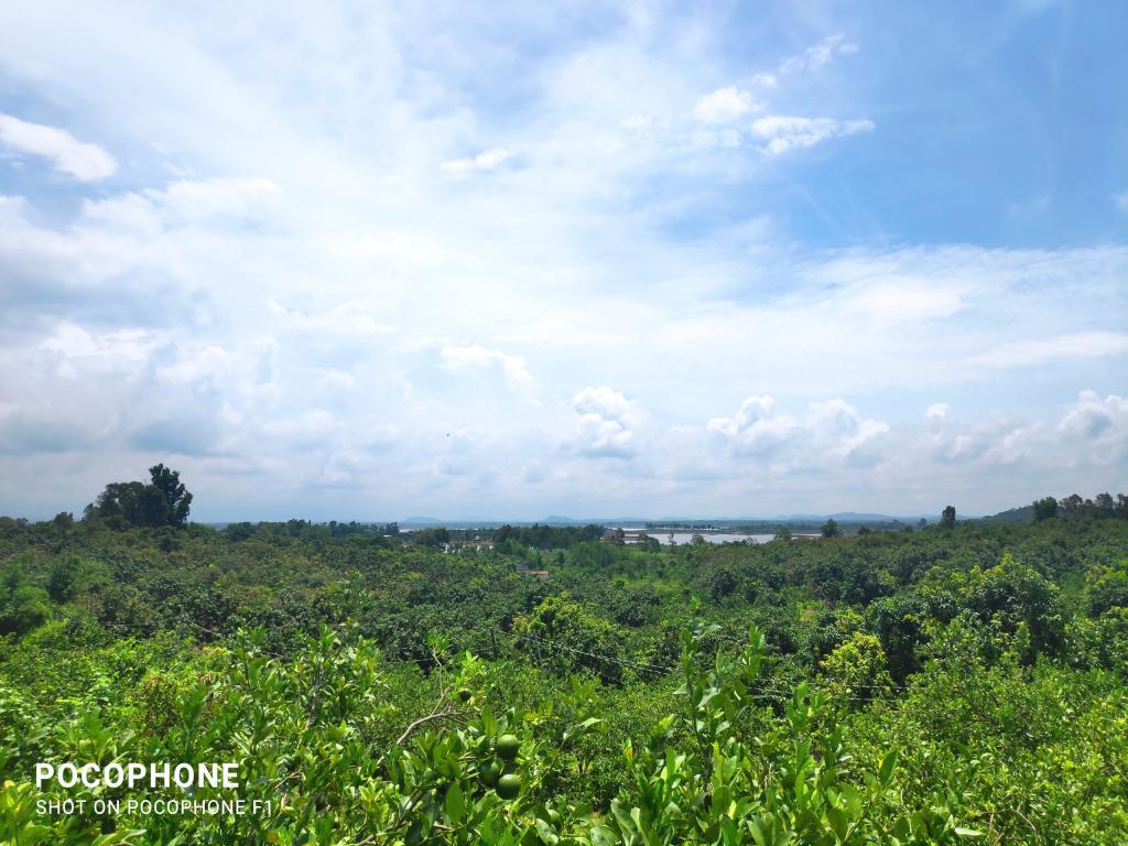 Đất vườn đẹp sổ sẵn Định Quán, Đồng Nai