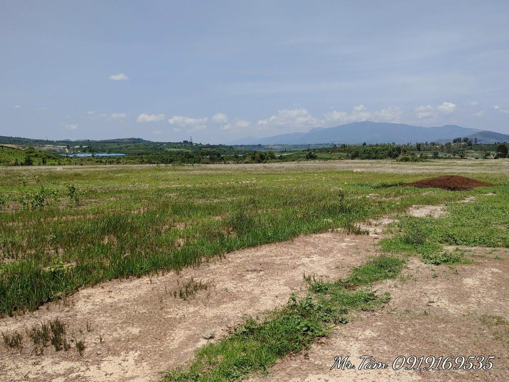 Bán 7.2 hecta đất đẹp bằng phẳng khu thác Pongour,Đức Trọng,Lâm Đồng, 360 triệu/1.000m2